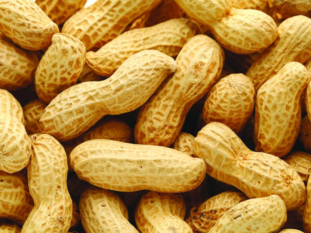 Allergies alimentaires en milieu scolaire : ce qu'il faut savoir