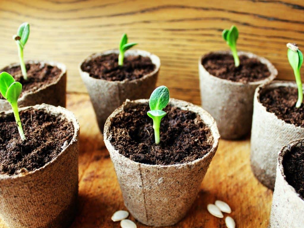 Produire ses légumes à l'année? Avec Hydromax Jardin Urbain, c'est possible!