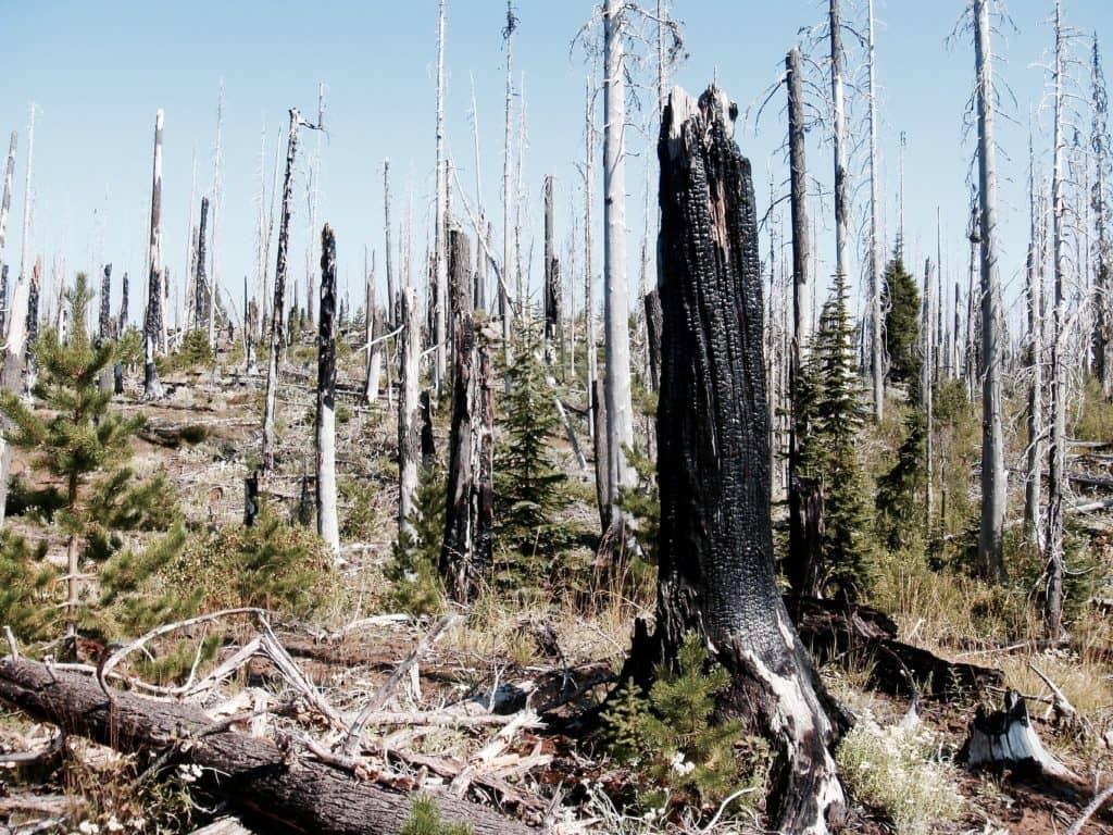 Interdiction des feux à ciel ouvert en forêt ou à proximité